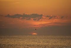 Mid-Atlantic morning.... (Joe Hengel) Tags: morning goodmorning morninglight clouds atlanticocean outdoor ocean rehobothbeach delaware midatlantic sunrise sun horizon sea seascape seaside seashore seagull waves water watchingthesunrise