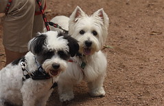 Dog Admission Day, Morton Arboretum. 3 (EOS) (Mega-Magpie) Tags: canon eos 60d outdoors dog admission day the morton arboretum lisle dupage il illinois usa america cute puppy