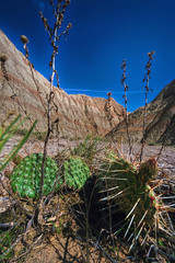 Life in the Badlands (kevinwenning) Tags: wenning wash flowers cliffs southdakota badlands ground dead spines kevinwenning intentionallylostcom life cactus unitedstates living desert nobody