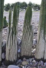 Dunster groynes (carolyngifford) Tags: beach dunster groyne