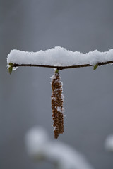 ckuchem-8082 (christine_kuchem) Tags: asthaufen baumstamm eis forst frost haufen holz staatsforst stmme tiere unterschlupf wald wasser wildnis winter winterschlaf winterwald gefroren gewsser kalt naturnah reif schnee wild ste