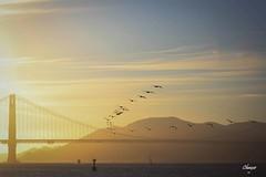 Golden Gate Birds Flight (Chauxe) Tags: ssf sanfrancisco usa chauxe canoneos canoneos60d canon etatsunis franais photographefranais photographe paisaje landscape unitedstates ouestamericain paysage roadtrip travel trip voyage soleil sun sunset couchdesoleil coucherdesoleil coucherdusoleil pont goldengate