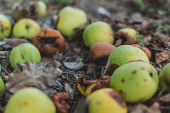 Autumn Apples (dhc_photos) Tags: autumn seasons equinox change fall color