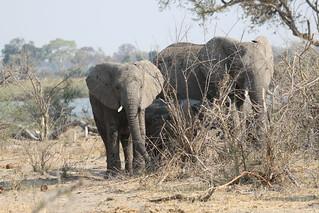 Namibia Dangerous Game Safari - Caprivi Strip 79