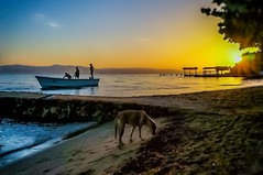 Quiet Tide I... (Jos Pestana) Tags: airelibre america americadelsur amerika bahia bay beach bote caribe coastline costa kystlinje litoral littoral mar marcaribe muelle paises pesquero pier playa sony sonynex sonynex6 southamerica sucre suramerica takutai talafatai tocuchare venecuela venetiola venetsueela venezoela venezuela venezwela venezyela wenezuela sahil