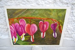 Bleeding hearts in watercolor (candiceshenefelt) Tags: watercolor watercolour painting art flowers flora floral bleedingheart bleedinghearts pink pinkflowers