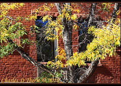 Old Colorado City Autumn (ctofcsco) Tags: 1320 190mm 50d 80 autumn canon colorado coloradosprings contrast ef28300mm ef28300mmf3556lisusm eos50d explore f8 foliage green orange red superzoom tree unitedstates usa yellow geo:lat=3884748653 geo:lon=10486324725 geotagged