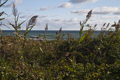 Fall at Coast Guard Beach (brucetopher) Tags: beach water view vista sit wave waves peace peaceful lounge sandbar sand bar surf shore seashore sea ocean beaches shorebreak break vacation holiday summer coast coastal seacoast fall offseason season autumn
