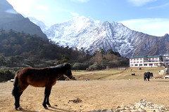 30. Mrz 2016 - unser 9. Trekking-Tag (Alfesto) Tags: nepal trekking wanderung himalaya namche khumbuarea sagarmathanationalpark tengboche lodge