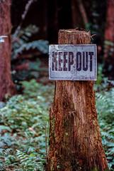 Keep Out, Near Ochopee, Florida (nsandin88) Tags: nikon ishootfilm nature exploration kodakektar ektar100 film developedathome jobo keepout ochopee bigcycpress c41 f4 florida everglades filmisnotdead outdoors fl sign ektar swamp kodak
