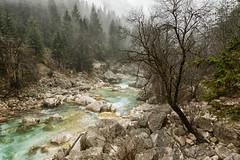 Soca river (marko.erman) Tags: soa slovenija slovenia river trenta mist misty mood moody landscape trees emerald isonzo beautiful nature travel preserved pure wild