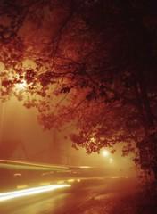 01 (karel.seidl) Tags: fog mist longexposition street oak