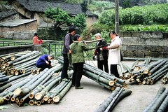 Bamboo loading point (Frhtau) Tags:  peoples republic bamboo bambus plant stick asia asian south east leute bauern collect sell  province schun shng  china sichuan countryside rural area farmer people market wage weight square passers by local business product natural food enviroment tradition traditional chinese chinoise chine einfarbig personen