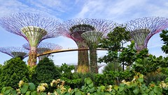 Super Tree Grove, Gardens by the Bay, Singapore (Frans.Sellies) Tags: 20160809174246 singapore