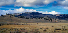 Yellowstone in the fall (alsimages1 - Thank you for 860.000 PAGE VIEWS) Tags: mountains valleys scenic views snow bison buffalo elk moos wolf waterfalls camping climbing landscape awe amazing