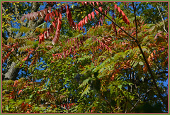 ``` Visions from Autumn - II. ``` (Wolverine09J ~ 1 Million + Views) Tags: lfgandcrdoct16 autumnfoliage sumac park minnesota city colorful minneapolis nature rainbowofnaturelevel1red