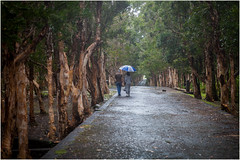 walking in the rain. (:: Blende 22 ::) Tags: blackrivergorges charminglittlepath trees southeastofthemauritius bume rain strasen streets regen schirm walking spazieren mauritius maskarenen island highlands canoneos5dmarkii ef2470f28liiusm green leaves wintertime