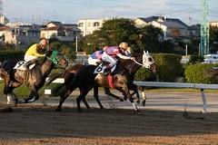 DSCF9353 (keita matsubara) Tags: urawa urawakeiba keiba horse race saitama japan