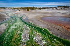 Norris Basin, Yellowstone National Park. (scepdoll) Tags: yellowstonenationalpark wyoming montana geysers norris oldfaithful cyanobacteria bluegreenalgae oxbowbend grandtetonnationalpark