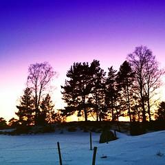 treescollection #tree #trees #winter #snow #sn... (TittaBilder) Tags: uploaded:by=flickstagram instagram:photo=410926041107009195271432306 treescollection tree trees winter snow sn solnedg sunset vinter uppsala instagram iphone