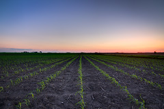 Some Day, We Will Feed the World (HDR) (roelex14) Tags: sunset canon lens high corn dynamic angle farm side country wide wideangle iowa tokina mm agriculture dslr range 1224mm f4 hdr 550d t2i