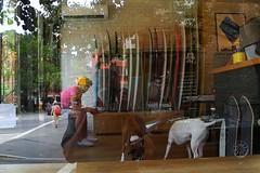 Saturdays (omoo) Tags: newyorkcity dogs window glass coffee self reflections store cafe surf westvillage streetscene surfboards doggies coffeebar greenwichvillage cornerstore saturdays pairofdogs dscn5354 perrystreetandwaverlyplace surfny surfboardsandexpresso dogsinacoffeebar saturdayssurfny