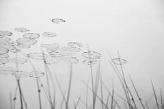 Laguna - ostia - aprile 2013 ( Domitilla ) Tags: blur andy beautiful 50mm bokeh x bianco solex 18105 lightx retrox marex bluex colorx blackx vintagex macrox texturex whitex stonesx nikonx d7000 dofx sunx woodx nerox collinsx focalx pebblesx