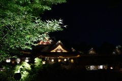 DSC_4042 (kazuchan_nara) Tags:   kyoto japan kitanotenmangu