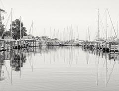 B&W marina reflections (shannon4462) Tags: bwmarina mono sailboats marina chesapeakebay harringtonharbor calvertcounty maryland nikon reflections masts