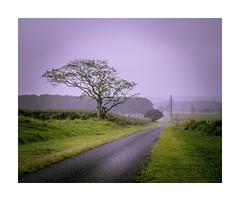 Purple Haze (jen 3163) Tags: road countryroad queensland fnq athertontablelands