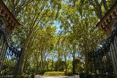 Green sky (Semprizio) Tags: green catania sicilia sicily italia italy villa bellini sky alberi albero tree trees park parco verde esterni nex6 sony