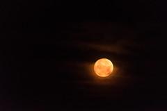 DSE_3256 (alfiow) Tags: moon moonlit moonset totland