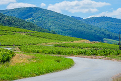 A road into the Beaujolais (Keinsei2) Tags: beaujolais vigne wine quincienbeaujolais rhne rhnealpes mont arbre trees verdure fujifilm xa1 paysage landscape nuage cloud ciel sky panneau sign road route virage zigzag