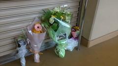 the 6th anniversary of Kou Kou's death (TaoTaoPanda) Tags: koukou