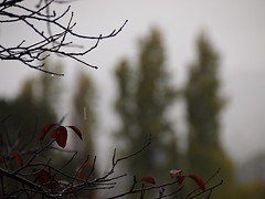 Rain 20141020 (caligula1995) Tags: 2014 plumtree rain sisters