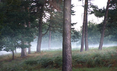Forest in the morning (na_photographs) Tags: tree trees woods fog mist