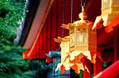 (yoshinori.okazaki) Tags:     red gold