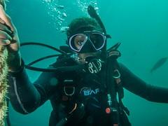 P1010831.jpg (Michael Bartosek) Tags: olympusepl3 catalinaisland olympus1442mm underwater catalina diving california pacificocean