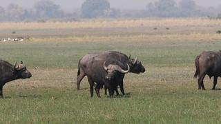 Namibia Dangerous Game Safari - Caprivi Strip 62