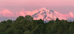 Seeing things in a different light (rowjimmy76) Tags: pnw pacificnorthwest oregon pdx portland mounthood cascademountains volcano snow peak alpenglow clouds pink sunrise forest trees rossisland willamettevalley johnslanding southwaterfront canon sl1 sigma18250mmf3563dcmacrooshsm landscape