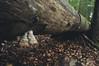 (Janshi -) Tags: polypore mushroom nature woods forest primeval