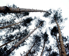 Bessa667_Kodak200_0004 (dmitriy.marichev) Tags: voigtlanderbessaiii 67 66 medium nature landscape film voigtlander bessa iii 8035heliar heliar kodak kodakfilm dmitriymarichev kiev ukraine photo rangefinder