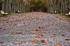 Autumn leaves (giuliaph.) Tags: autumn leaves leaf autunno nature park omg amazing cool foglie foglia colours colors colour color