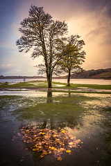 Refusing to let go (Dave Fieldhouse Photography) Tags: skye sky scotland isleofskye island autumn stormabigail storm flood leaves landscape outdoors canon5dmarkiii canon5dmark3 portrait skeabost skeabostcountryhousehotel trees