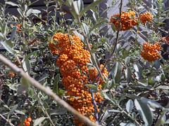 El seto naranja (Micheo) Tags: paseo walk city ciudad detalles details