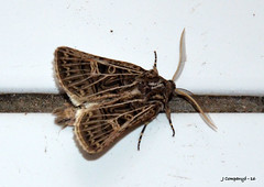 7 DSC_0041B (Pep Company - Barral) Tags: insectes animals natura papallona papallones mariposas borboletas butterfly papillon lepidopteres josep companyo barralo