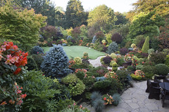 Garden colours of mid autumn  (3rd Oct) (Four Seasons Garden) Tags: four seasons garden uk england west midlands walsall autumn 2016 october japanese maples acers leaves begonia flowers ornamental conifers blue red yellow orange apricot yorkstone evergreens colour