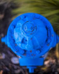 bluehydrant (gotmyxomatosis69) Tags: texas plano planotexas firehydrant hydrant blue canon teamcanon 50mm canon5d canon5dmarkiii