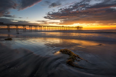 Seaweed (David Colombo Photography) Tags: lajolla scrippspier sunset seaweed pacific ocean sun clouds sky landscape seascape sea beach reflection sand lowtide california orange red blue outdoor pier scripps nikon d800 davidcolombo davidcolombophotography dusk longexposure sandiego