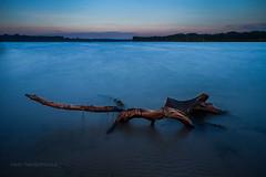 Old Stump (P.Tob-Ys) Tags: stump water lake pond sea stillife longexposure bluehour sunset sky outdoor lanscape